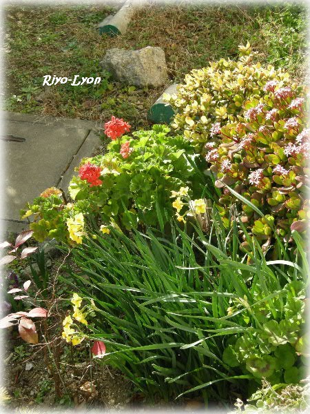 ウチの前の花壇の花たち♪
