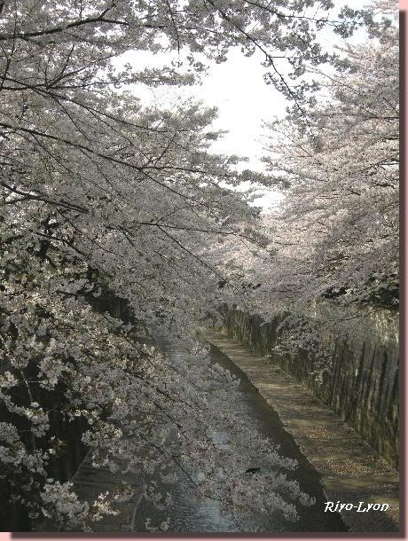 石神井川にて。